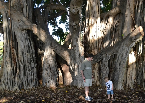 Lincoln & Dad underneath a banyan tree...