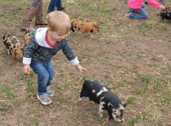 Another weekend, we took a tour of a local farm... where I fell in love with these baby pigs...